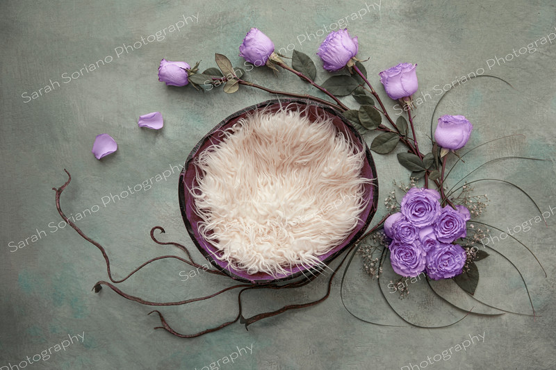 883A3555 purple.jpg