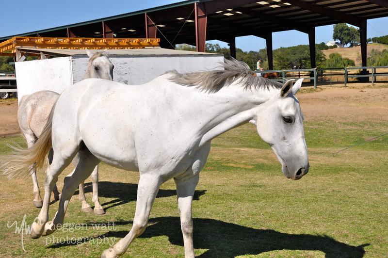 EB&Horses-072.jpg