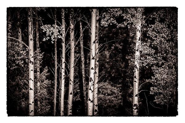 Tones of Black & White