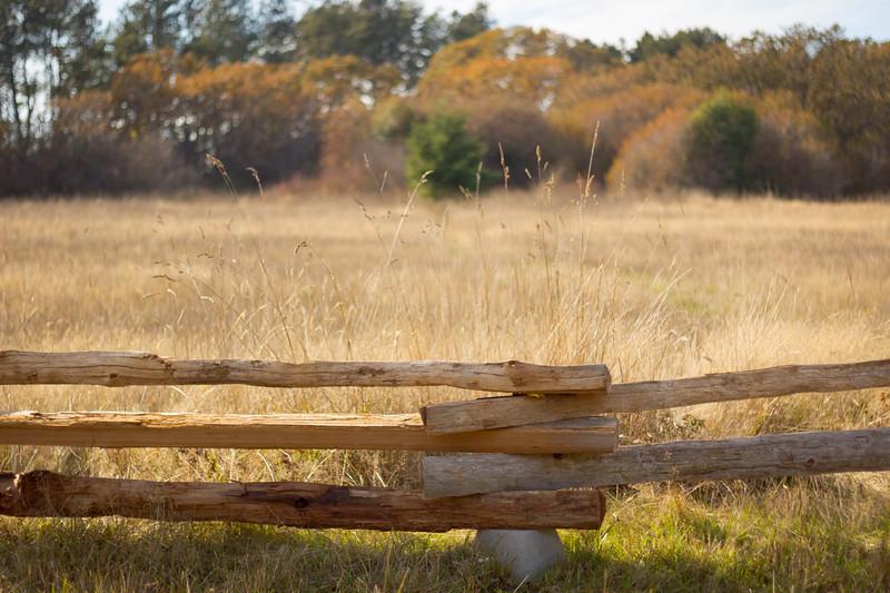 grass fence.jpg