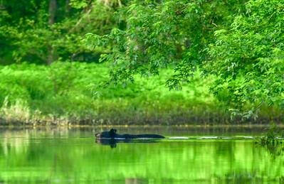 Wallkill River - June 7, 2019