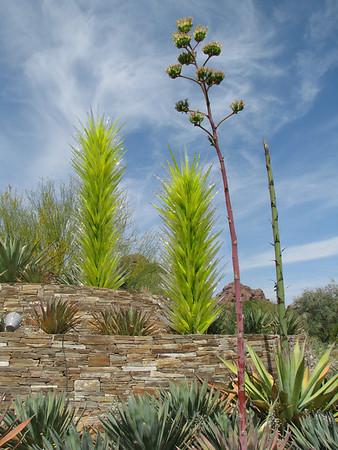 Phoenix - Desert Botanical Garden