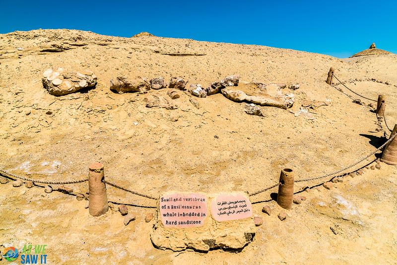 Wadi-El-Hitaan-02342.jpg