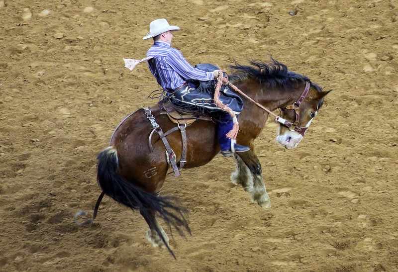 Bronc leaves the ground and rises into the sir.
