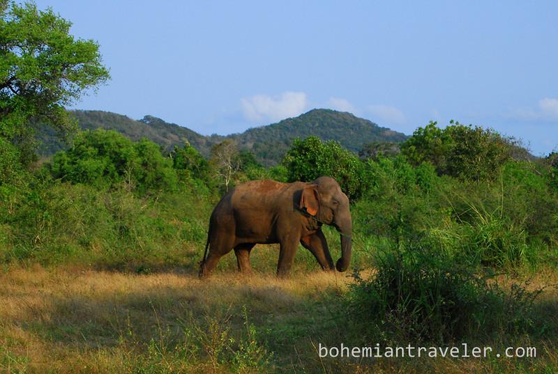 elephant in Habarana Eco Park (7).jpg