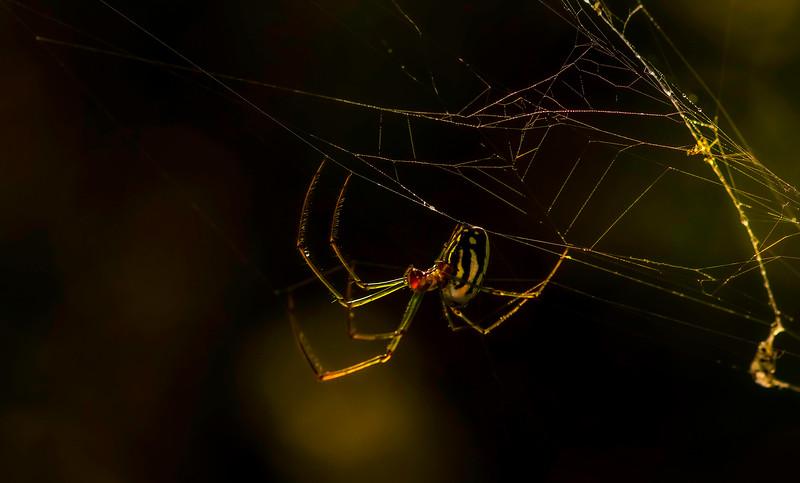 Spiders-Arachnids-071.jpg