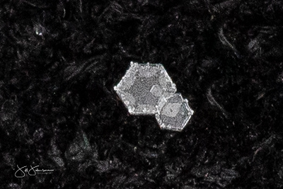 snowflakes-1615.jpg