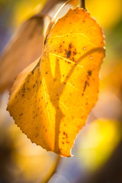 20151024-Fall Colors-42.jpg