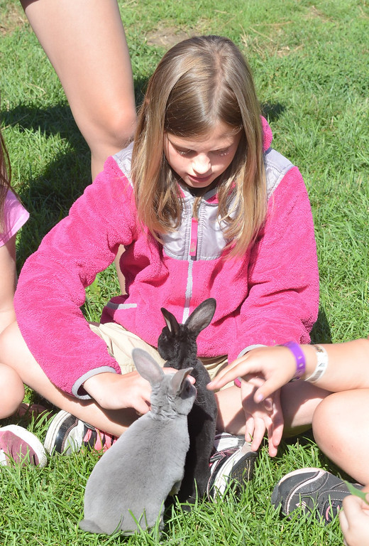 . Grace Liotino, 9, pets a couple of bunnies during Farm Camp at Hess-Hathaway Park in Waterford Township.   Thursday, July 25, 2013.  The Oakland Press/TIM THOMPSON