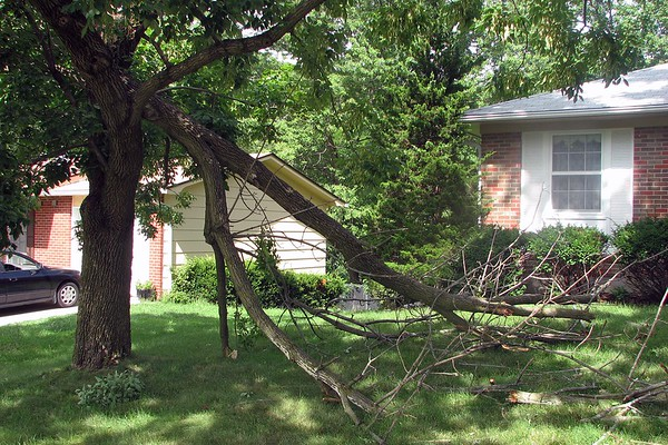 July 28, 2008:  Huge branch down in the front yard .  .  .