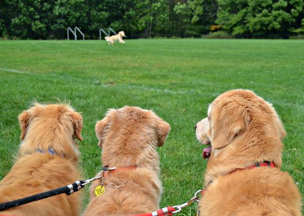 Darla, Lucy & Desi Esgro watching Gabby during the Field Training Demo