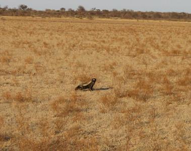 Cavalier Travels: Botswana 2011