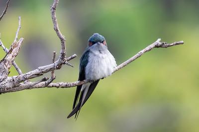 2019-12-05 Birding at AMK Central