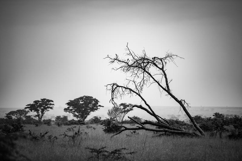 Uganda_T_QE-1696.jpg