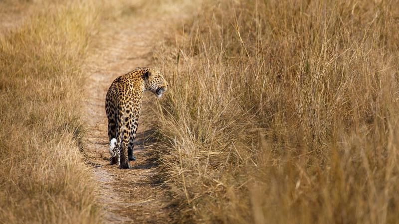 Botswana_0818_PSokol-1527.jpg