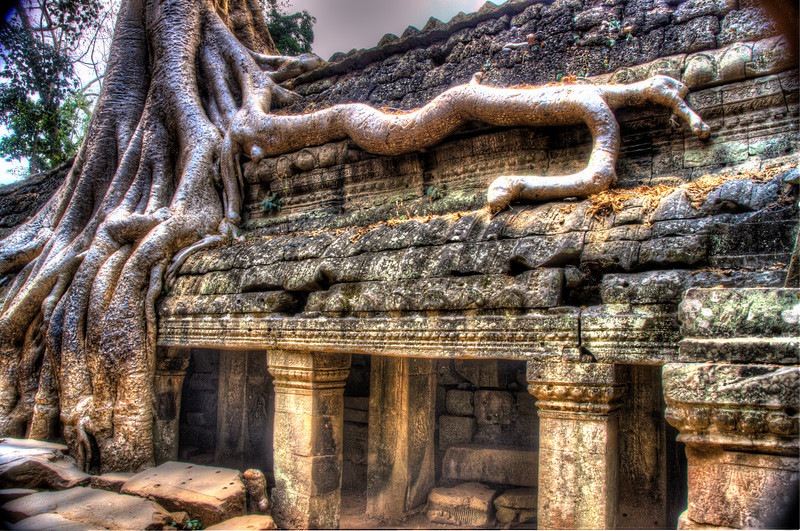 CambodiaTaPhromRootsonTempleDSC_4979_80_81.jpg