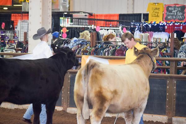 OYE OCA Futurity Heifer Show