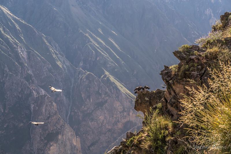 Colca Canyon-1255.jpg