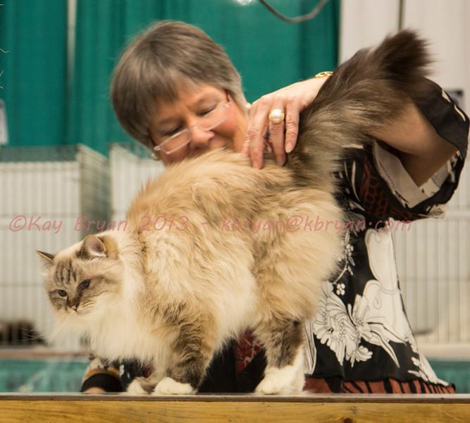 CatShow2014017.JPG