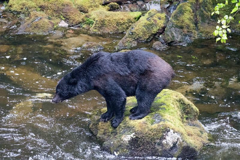 Alaska 2015 - Ketchican -  072815-017.jpg