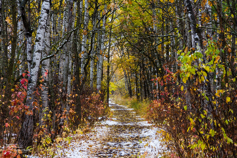 Seasons in the Assiniboine Forest