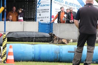 20150621 Hondenwedstrijd de Trouwe Waker Poppel