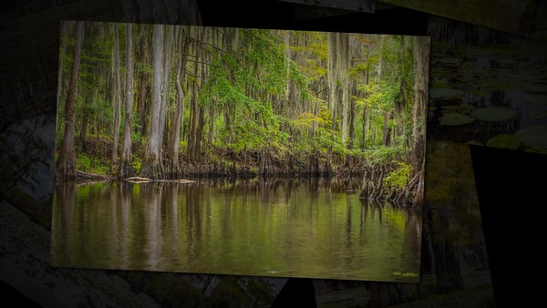 Caddo Lake in Color