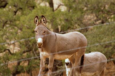 Horse_Relatives