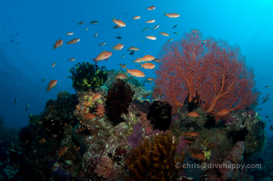 Kakoban Reef Scene © Chris Mitchell