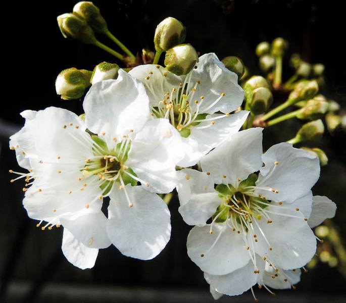 spring flowers-1000751-3.jpg