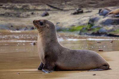 Galapagos Islands - Sea Lions 2012