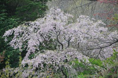Spring in Hakone