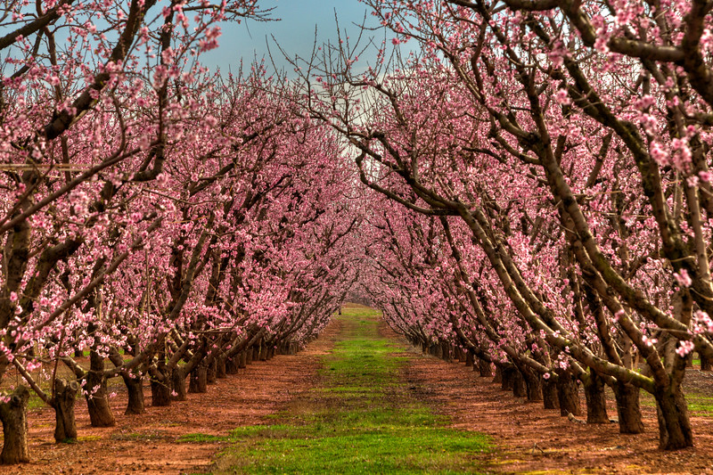 Strawberry Hill USA in Chesnee, SC