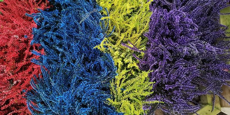 Colourful bush