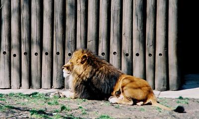 Zoo April 2009