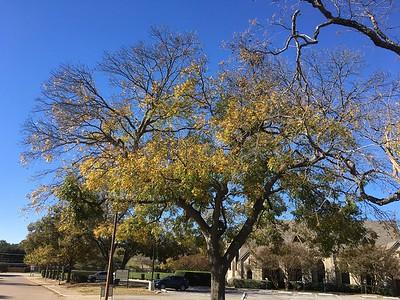 iPhone_Fall Trees