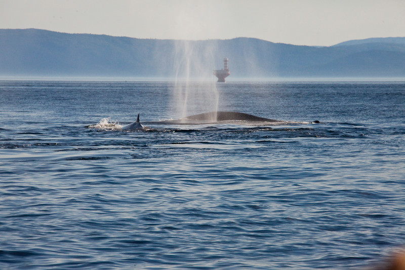2011 quebec whale watching (42 of 80).jpg