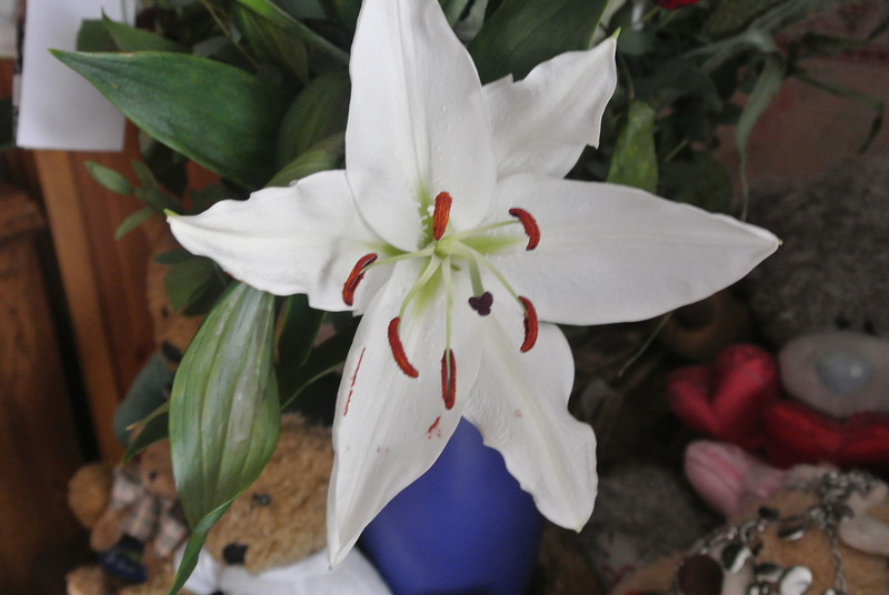 2013-02-18 Lily 01.JPG