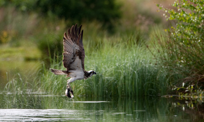 Osprey best .jpg