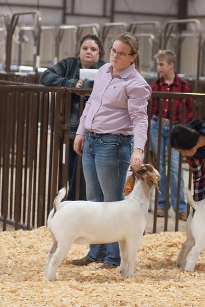 kay_county_showdown_goats_20191207-190.jpg
