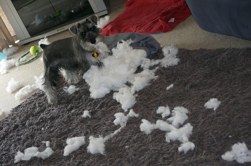 I didn't do it!