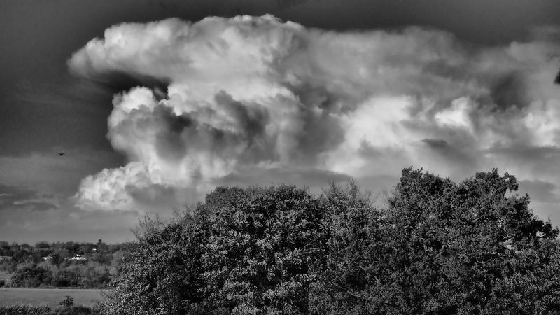Autumn convection b&w
