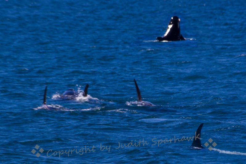 Orca Playground