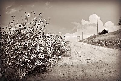 Roads, fence lines, fields, plants...