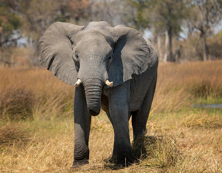 2014-08Aug-Okavango Masters-74-Edit.jpg