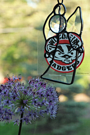 2013 06 25: Badger Admitted Student Decal