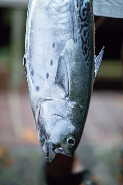marthasvineyardderbyflyfishing.bcarmichael2018 (34 of 69).jpg