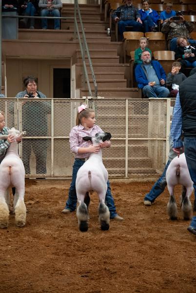 Wilburton Winter Classic Sheep Show