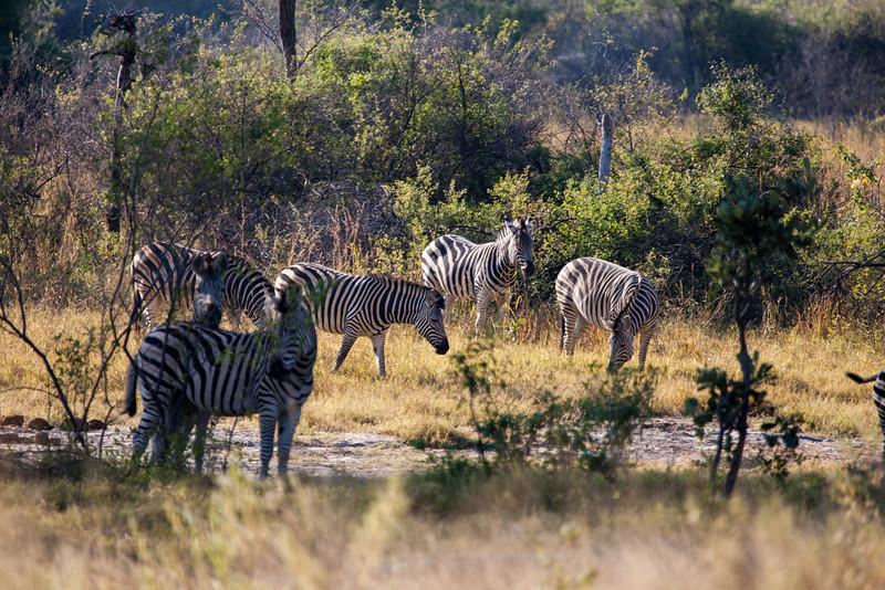 Botswana-28.jpg