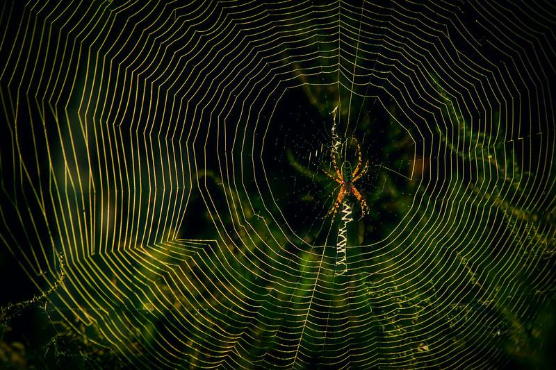 Spiders-Arachnids-040.jpg